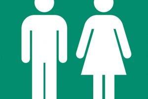 Spanish: Masciline or feminine quiz