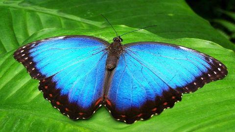 spanish vocabulary butterfly mariposa