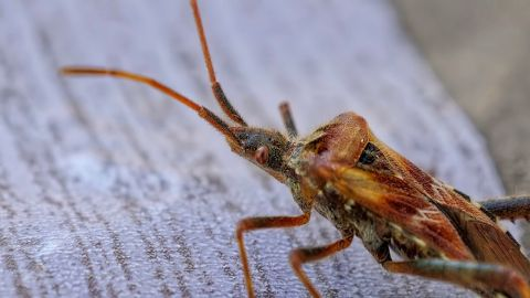 spanish vocabulary insects coackroach