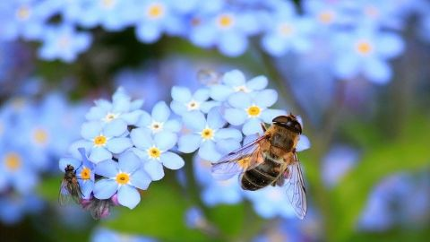 spanish vocabulary insects bee abeja
