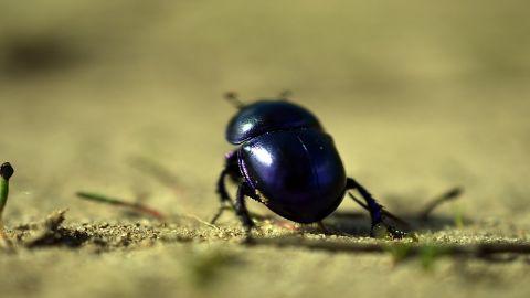 spanish vocabulary insects beetje escarabajo