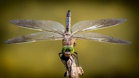 spanish vocabulary dragonfly libelula