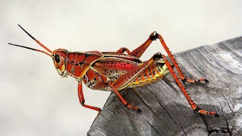 spanish vocabulary grasshopper saltamontes