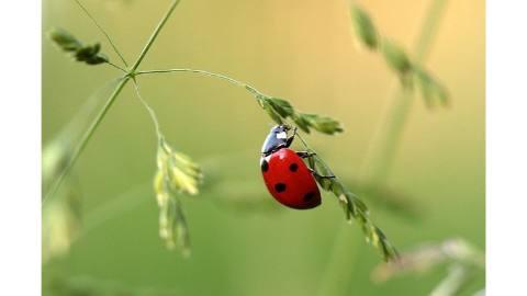 spanish vocabulary ladybug