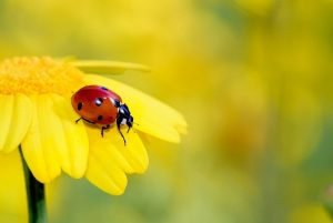 Spanish vocabulary - insects and bugs